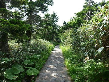 八幡平山頂散策14(2012.7.31)
