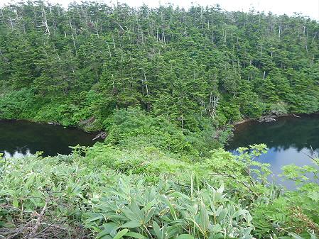 八幡平山頂散策23(2012.7.31)