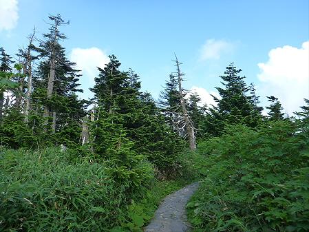 八幡平山頂散策27(2012.7.31)