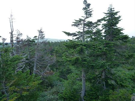 八幡平山頂散策33(2012.7.31)