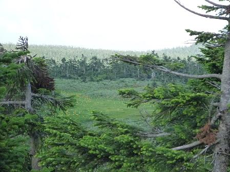 八幡平山頂散策34(2012.7.31)