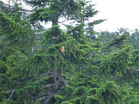 八幡平山頂散策36(2012.7.31)