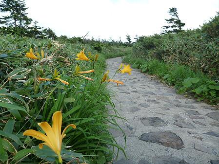 八幡平山頂散策38(2012.7.31)