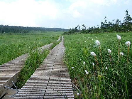 八幡平山頂散策その2 12(2012.7.31)