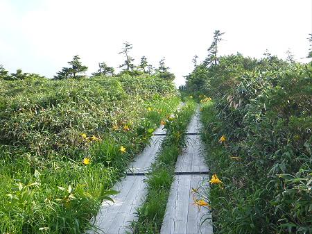 八幡平山頂散策その2 16(2012.7.31)