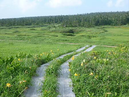 八幡平山頂散策その2 24(2012.7.31)