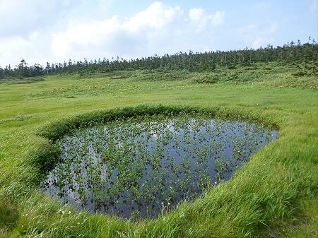 八幡平山頂散策その2 29(2012.7.31)