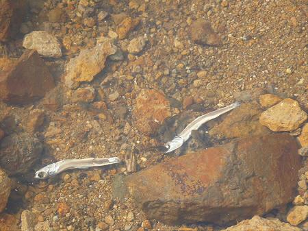 八幡平山頂散策その2 31(2012.7.31)