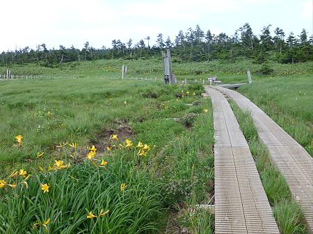 八幡平山頂散策その2 33(2012.7.31)