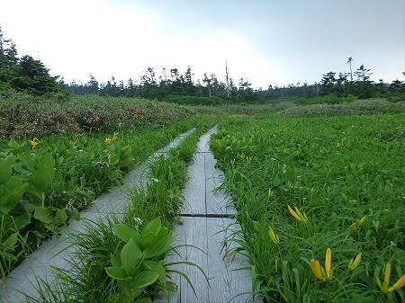 八幡平山頂散策その3 04(2012.7.31)