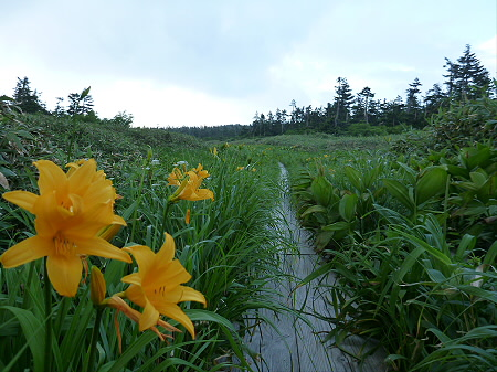 八幡平山頂散策その3 05(2012.7.31)