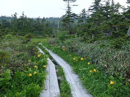 八幡平山頂散策その3 13(2012.7.31)