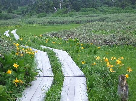 八幡平山頂散策その3 17(2012.7.31)