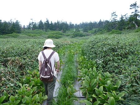 八幡平山頂散策その3 19(2012.7.31)