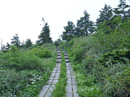 八幡平山頂散策その3 25(2012.7.31)