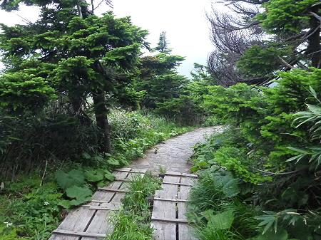 八幡平山頂散策その3 26(2012.7.31)