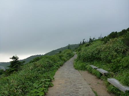 八幡平山頂散策その3 27(2012.7.31)