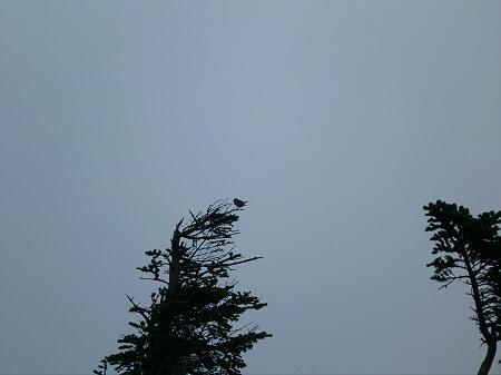 八幡平山頂散策その3 32(2012.7.31)