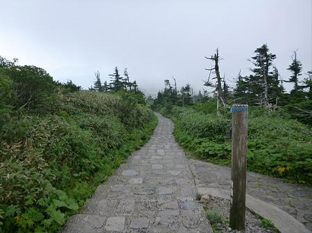 八幡平山頂散策その3 34(2012.7.31)