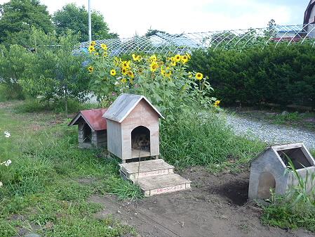 犬小屋スリー01(2012.8.7)