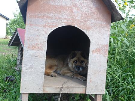 犬小屋スリー02(2012.8.7)