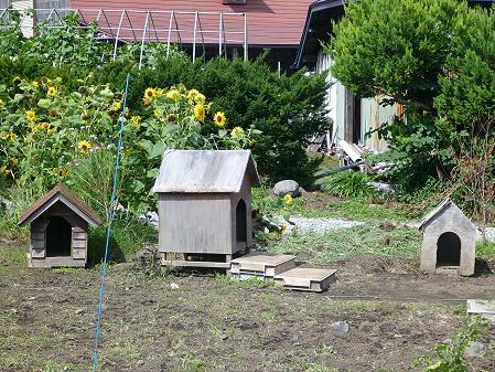 犬小屋スリー01(2012.8.15)