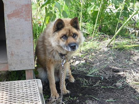 犬小屋スリー02(2012.8.15)