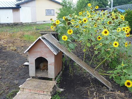 犬小屋スリー02(2012.8.25)