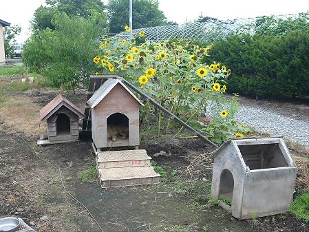 犬小屋スリー01(2012.8.27)