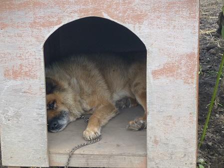 犬小屋スリー02(2012.8.27)
