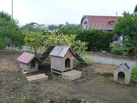 犬小屋スリー01(2012.8.28)
