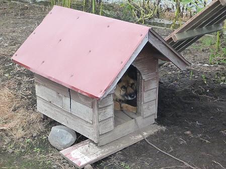 犬小屋スリー02(2012.8.28)