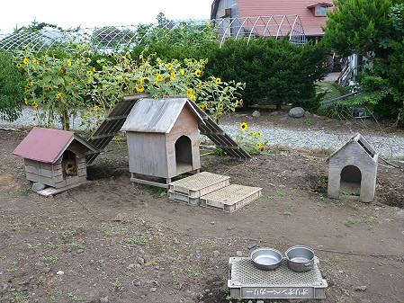 犬小屋スリー01(2012.8.31)