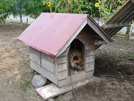 犬小屋スリー02(2012.8.31)