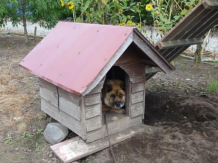 犬小屋スリー03(2012.8.31)