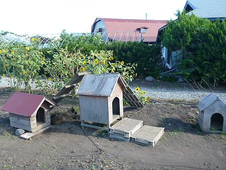 犬小屋スリー02(2012.9.1)