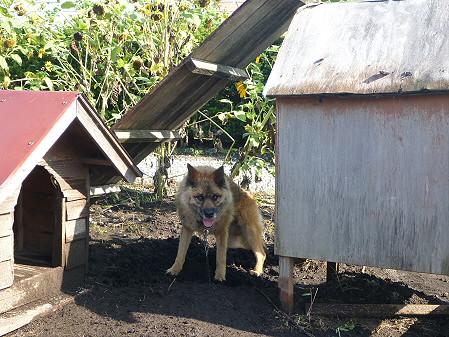 犬小屋スリー02(2012.9.5)