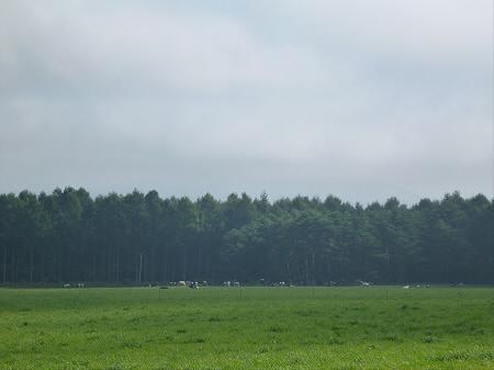 上坊牧野02(2012.9.7)