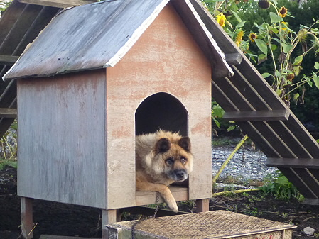 犬小屋スリー01(2012.9.8)