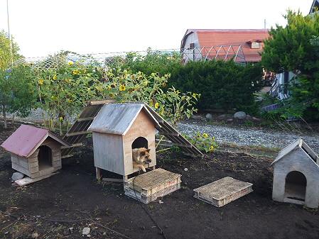 犬小屋スリー02(2012.9.8)