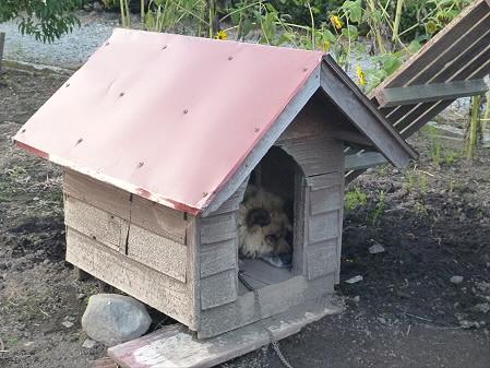 犬小屋スリー04(2012.9.8)