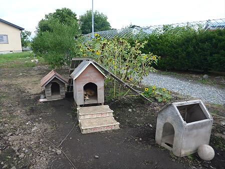 犬小屋スリー01(2012.9.10)