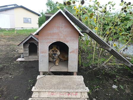 犬小屋スリー02(2012.9.10)