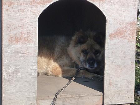 犬小屋スリー02(2012.9.11)