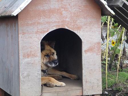 犬小屋スリー02(2012.9.12)