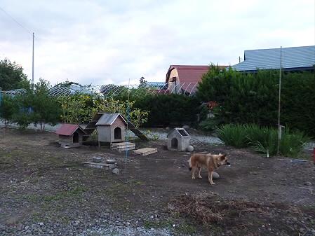 犬小屋スリー01(2012.9.13)