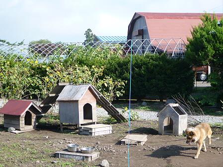 犬小屋スリー01(2012.9.14)