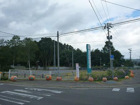 かぼちゃ01(2012.9.19)