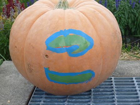 かぼちゃ08(2012.9.19)