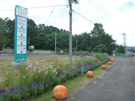 かぼちゃ10(2012.9.19)